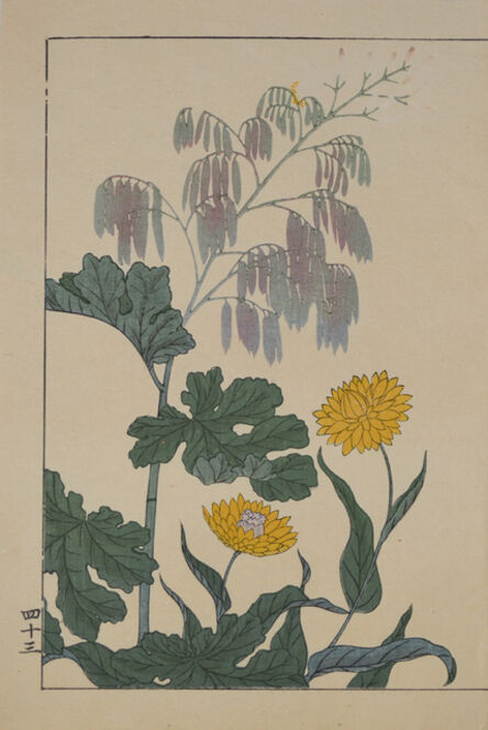 hoitsu, 'Yellow Summer Mum', 1907