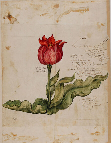 Conrad Gessner, 'Historia plantarum'