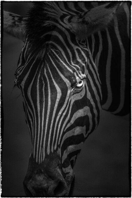 Matsui Yasunori, 'Chapman's Zebra', 2010