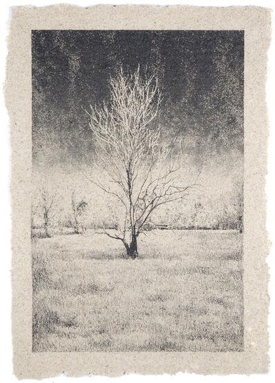 Matthew Brandt, 'Tree 13'