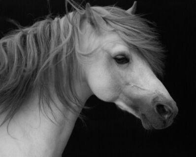 Sheila Rock, 'Horse #2', ca. 1999