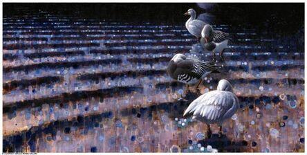Ewoud De Groot, 'Preening Snowgeese', 2007