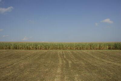 David S. Allee, 'Corn Field', 2009