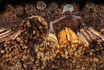 Somenath Mukhopadhyay, 'Wood Man', 2010