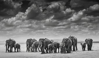 David Yarrow, 'The Crossing', 2015