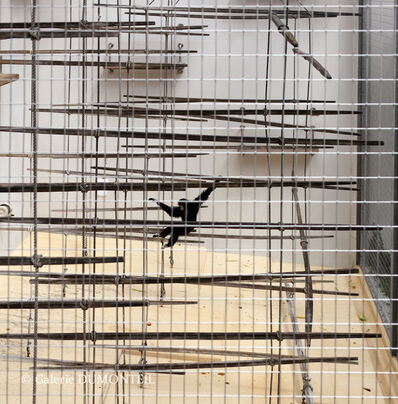 Eric Pillot, 'Gibbon and Cage', 2012
