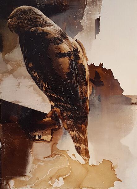 James Griffith, 'Hawk', 2016
