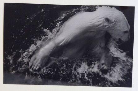 Alexander Rodchenko, 'The polar bear at the Moscow Zoo', 1947