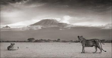 Nick Brandt, 'Lioness with Kilimanjaro, Amboseli', 2010