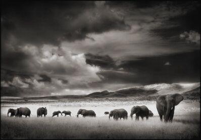 Nick Brandt, 'Elephant Herd, Serengeti, 2001', 2001