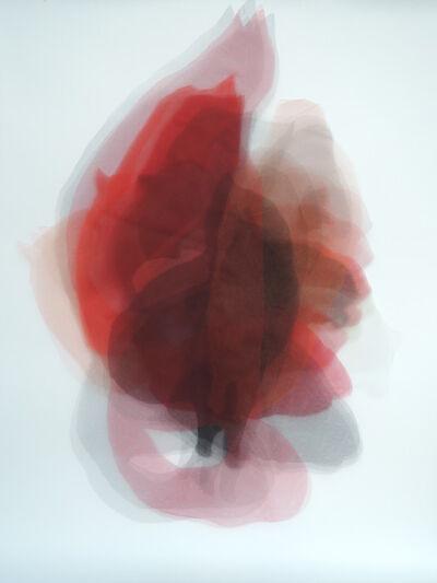 Teresa Giarcovich, 'Visión con forma de gato', 2015