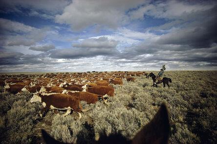 William Albert Allard, 'Moving a herd of cattle in northeastern Nevada', 1979