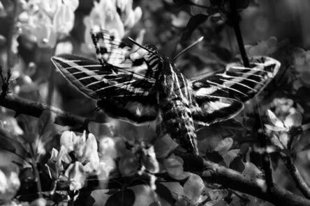 Sarah Rara, 'Moth and Butterfly Collide No Apologies', 2020