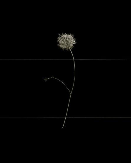 Brigitte Lustenberger, 'Flowers XVIII', 2016