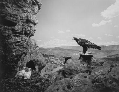 Hiroshi Sugimoto, 'Golden Eagle'', 1994