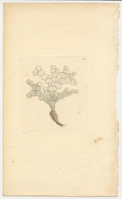 Frederick Polydore Nodder, 'Plate 190: Tuna Coralline', ca. 1790