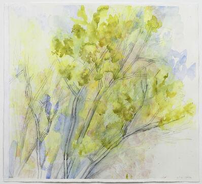Sylvia Plimack Mangold, 'The Pin Oak 4/13', 2013