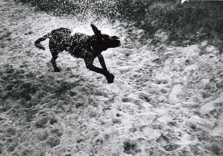 Walter Schels, 'Dog #9'