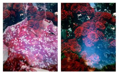 Connie Samaras, 'Huntington Rose Garden and OEB 7350, Photograph of Octavia E. Butler, Washington, 2001', 2016