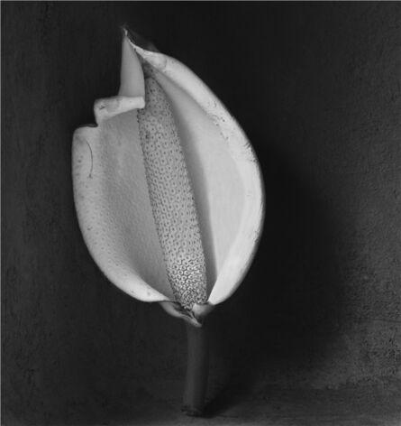 Flor Garduño, 'Pinanona', 2000