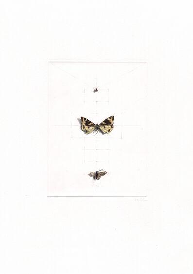 ALEXANDRA KONTRINER, 'butterflies', 2014