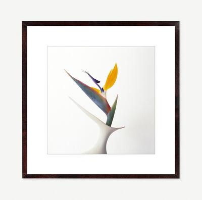 Vivienne Foley, 'Strelitzia in Ivory Winged Form Vase', 1999