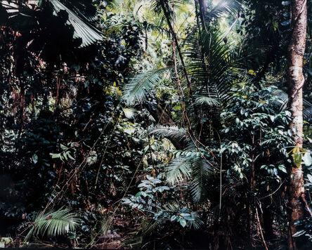 Thomas Struth, 'Paradise 6, Daintree/Australien', 1998