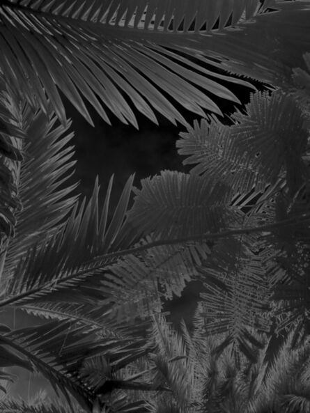 Karine Laval, 'Untitled #3, from the Black Palms Series', 2014