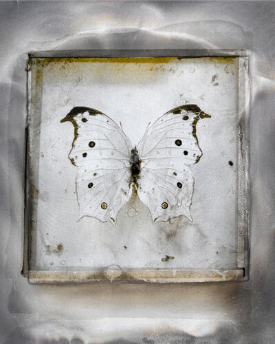 Alida Fish, 'Metcalf Collection #1', 2016