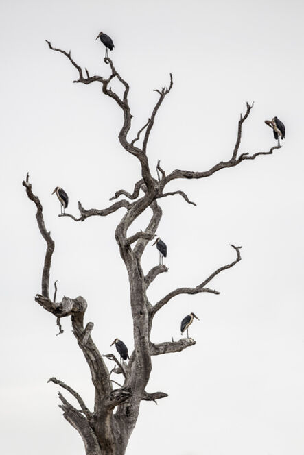 Donn Delson, 'The Family Tree'