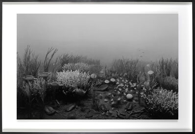 Hiroshi Sugimoto, 'Cambrian Period', 1992