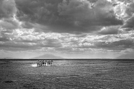 Michel Ghatan, 'Zebra Infinity', Amboseli, Kenya, 2019