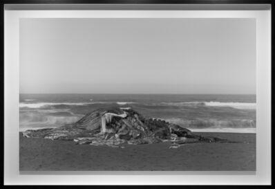 Richard Learoyd, 'Whale, Pacifica', 2015