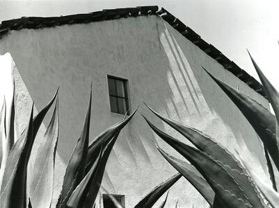 Manuel Álvarez Bravo, 'Ventana a los magueyes', 1976