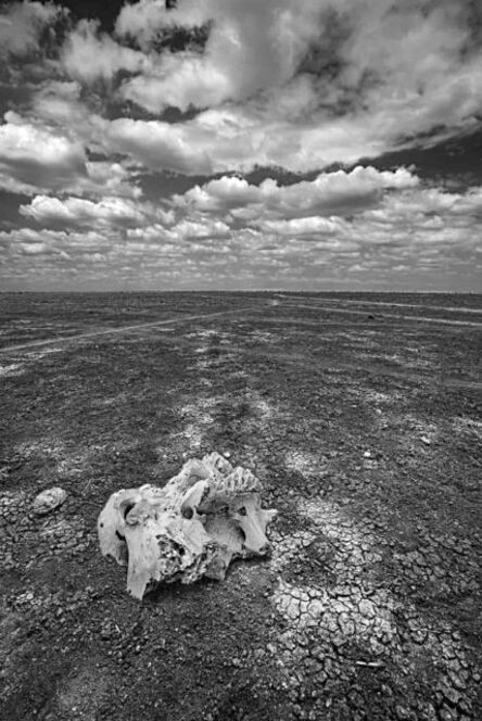 Michel Ghatan, 'Skull on the Dry Lake', Amboseli, Kenya, 2019