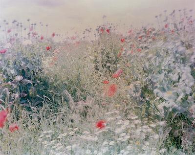 Ori Gersht, 'Wildflowers from Flowers', 2004