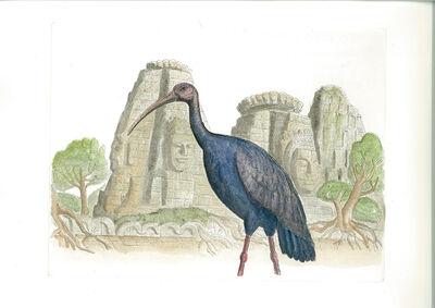 Bjorn Skaarup, 'Giant Ibis, Cambodia', 2016