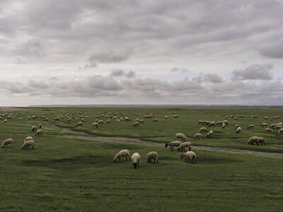 Lucas Lenci, '207 ovelhas na Normandia', 2016