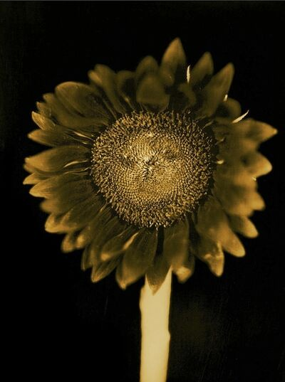 Chuck Close, 'Untitled (Sunflower)', 2011
