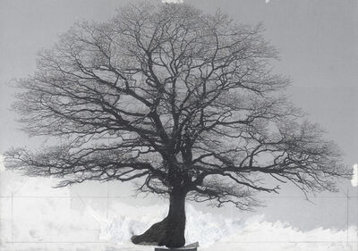 Patrick Van Caeckenbergh, 'Drawing of old trees on wintry days during 2007-2014', 2007