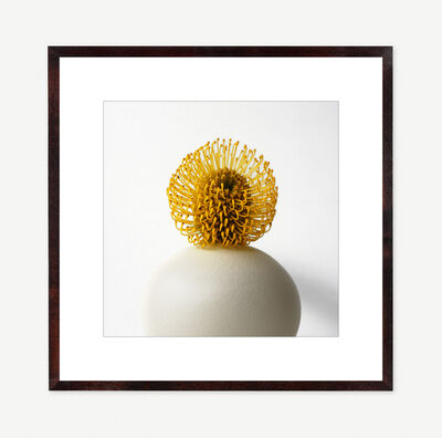 Vivienne Foley, 'Pincushion Protea in Ivory Crackle Vase', 2004