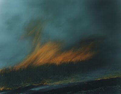 """Rinko Kawauchi, 'Untitled, from the series """"Ametsuchi""""', 2013"""