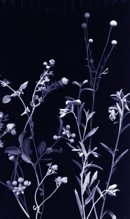 Chong Weixin, 'flores nativias .1', 2017