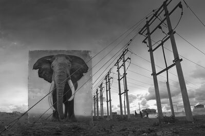 Nick Brandt, 'Electric Pylons with Elephant', 2014