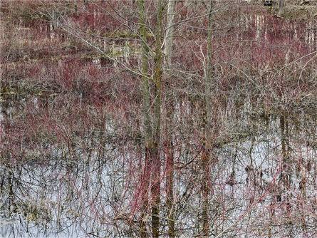 Edward Burtynsky, 'Natural Order #20, Grey County, Ontario, Canada, Spring', 2020