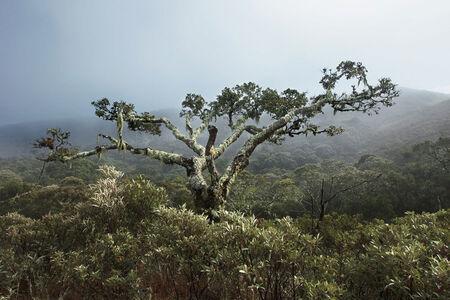 Araquém Alcântara, 'Serra da Bocaina National Park, Brazil', 2007