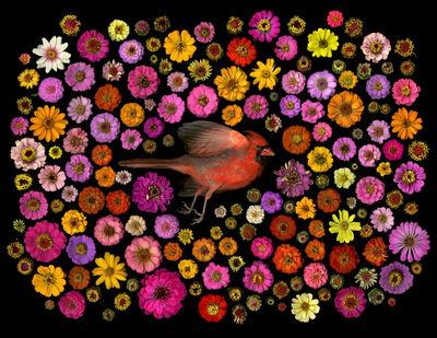 Portia Munson, 'Cardinal', 2016