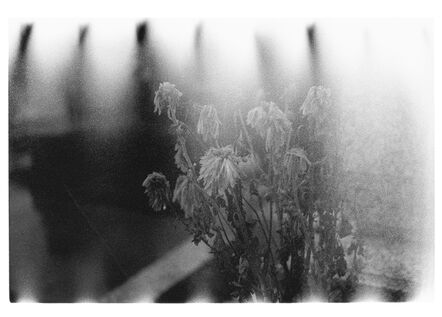 Sakiko Nomura, 'Nude / A Room / Flowers #153', 2012