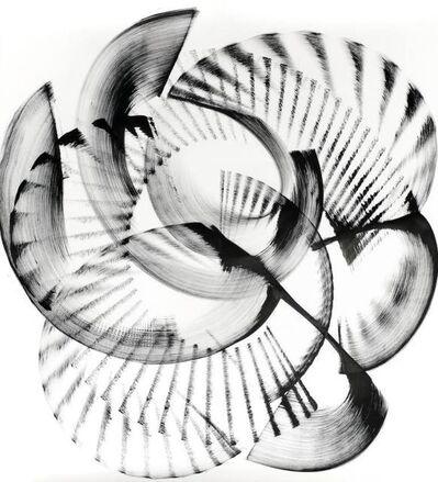 Thomas Hammer, 'Encephalartos relictus', 2016