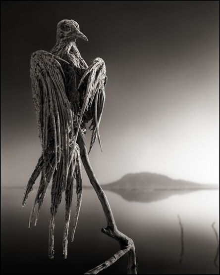 Nick Brandt, 'Calcified Caped Dove, Lake Natron 2010', 2010